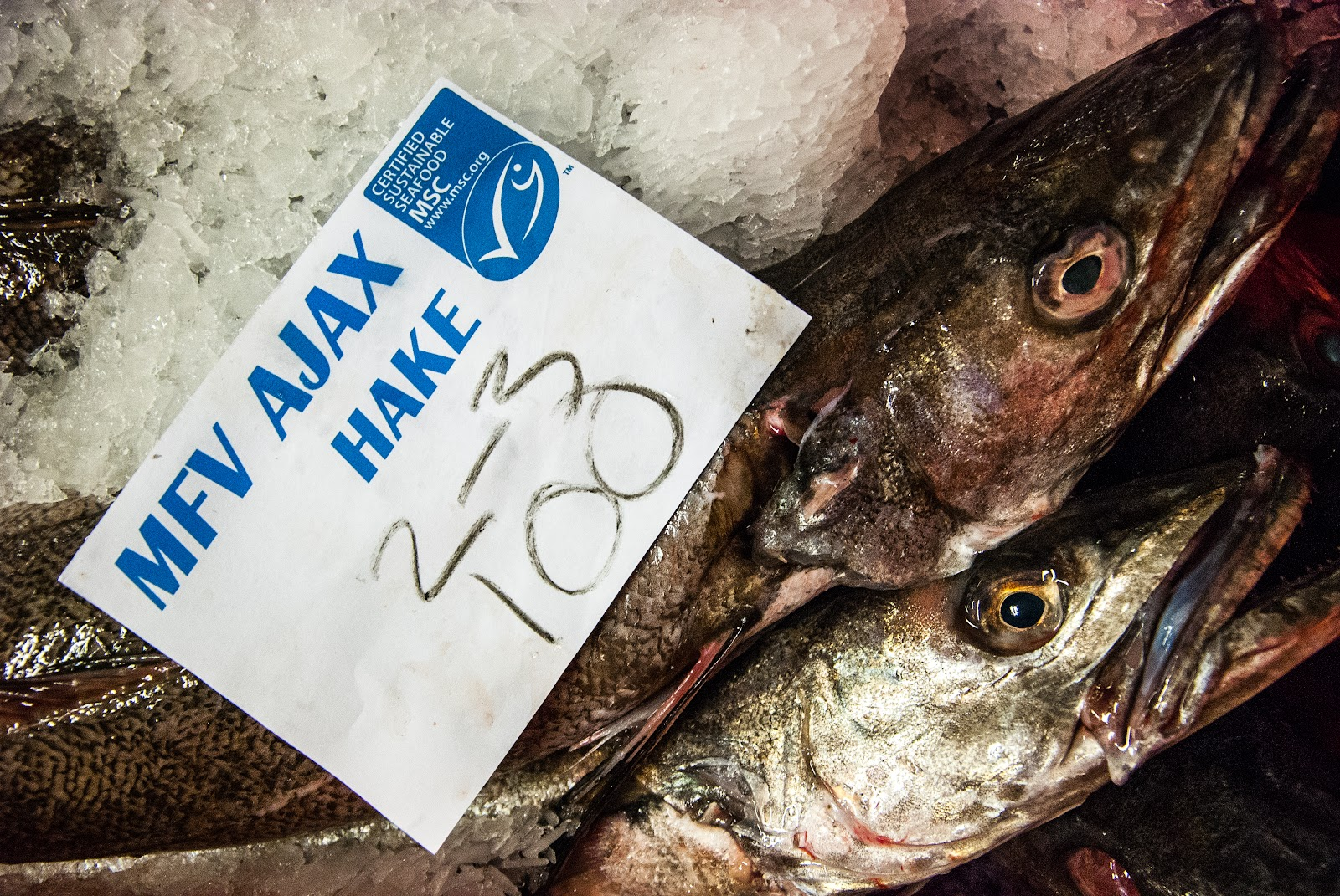 Through The Gaps Newlyn Fishing News The Sustainable