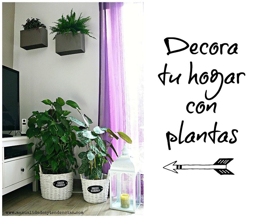 Rincón de plantas de interior en el salón