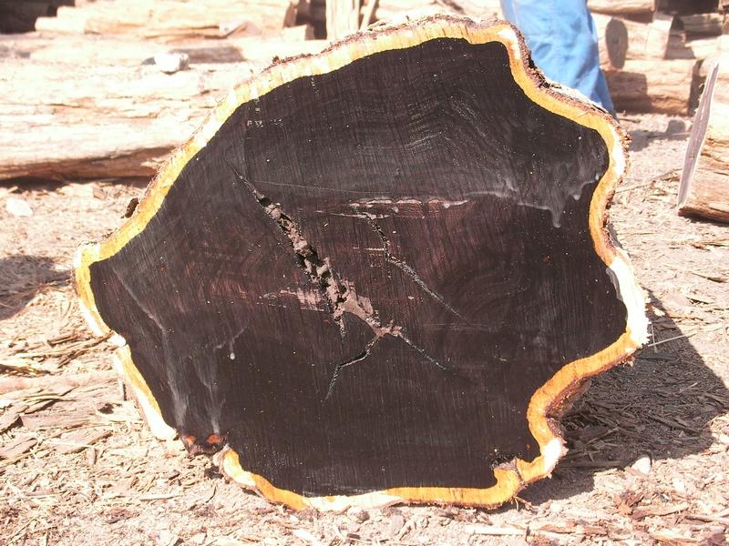 Bongodaily African Blackwood Mpingo