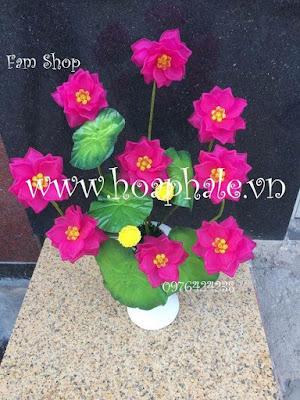 Hoa da pha le o My Dinh 2