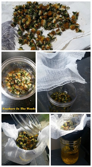 make dandelion oil from flowers