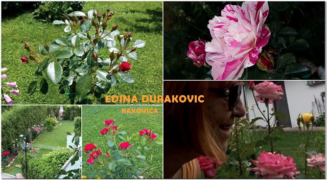 Ruže, Rakovica, BiH