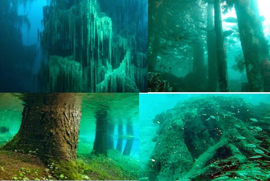 Image result for forest found underwater in alabama