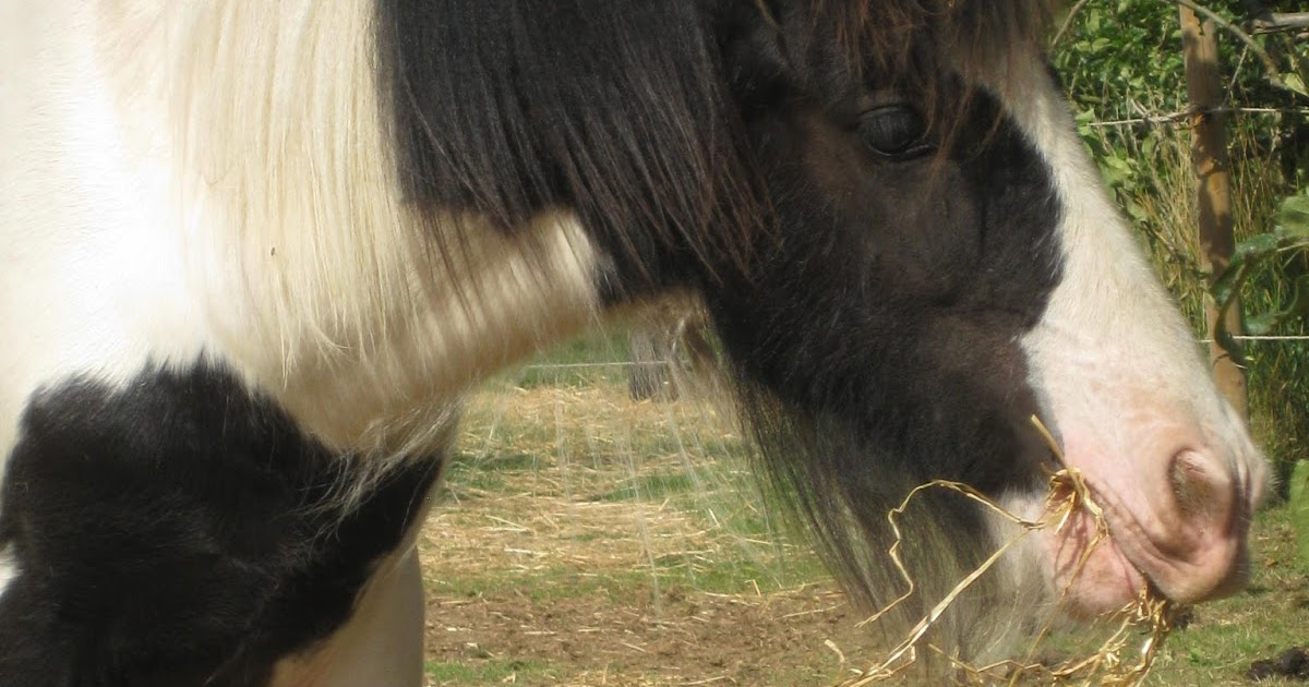Vitamins for the Rescue Pony ~ Eggsy samples Spillers Daily Balancer