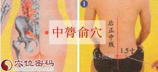 中膂俞穴位 | 中膂俞穴痛位置 - 穴道按摩經絡圖解 | Source:xueweitu.iiyun.com