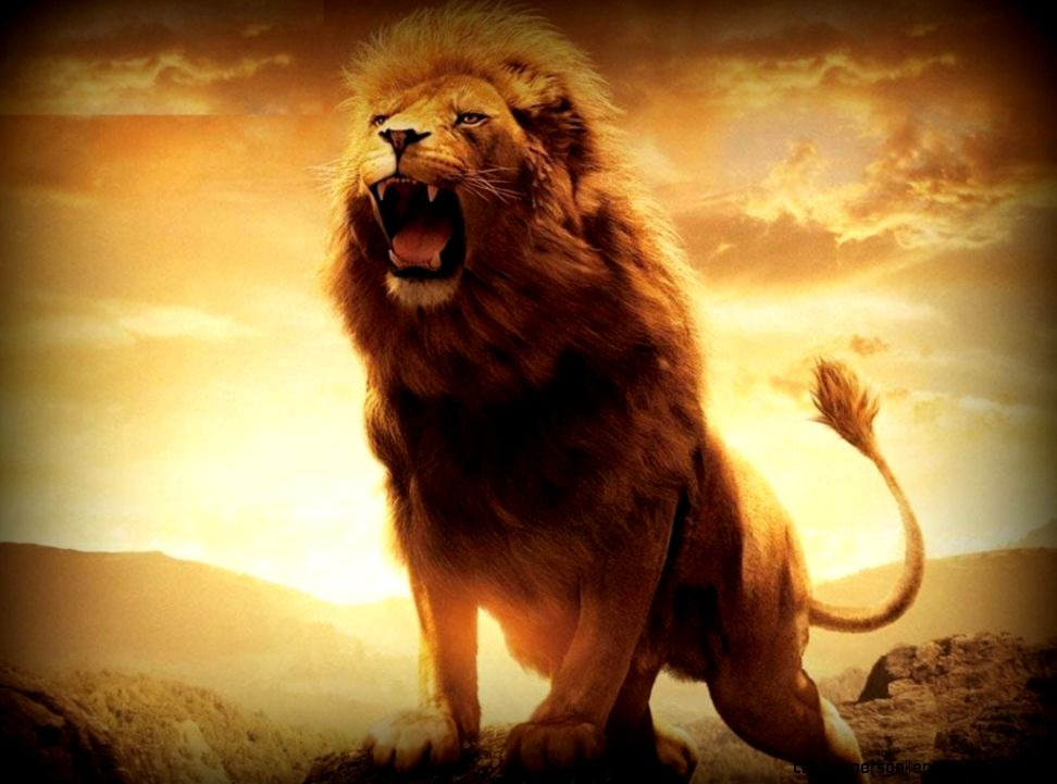 Angry Lion Wallpaper Hd Wallpapers Gallery