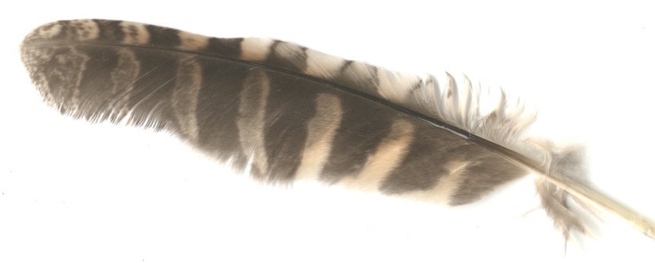 The Paranormal Corner: Cherokee Screech Owls
