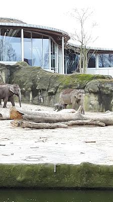 Ausflug mit Kindern in den Kölner Zoo - Reiseblog für Kinder