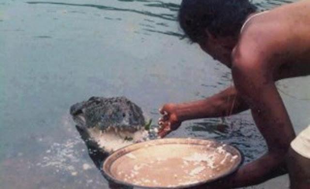 Babiya: The vegetarian crocodile