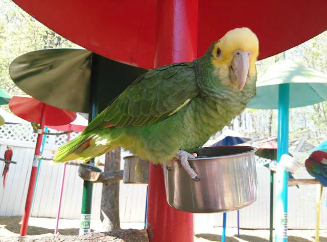 See Parrots on Vacation or Field Trip: Visit Parrot Mountain Tennessee