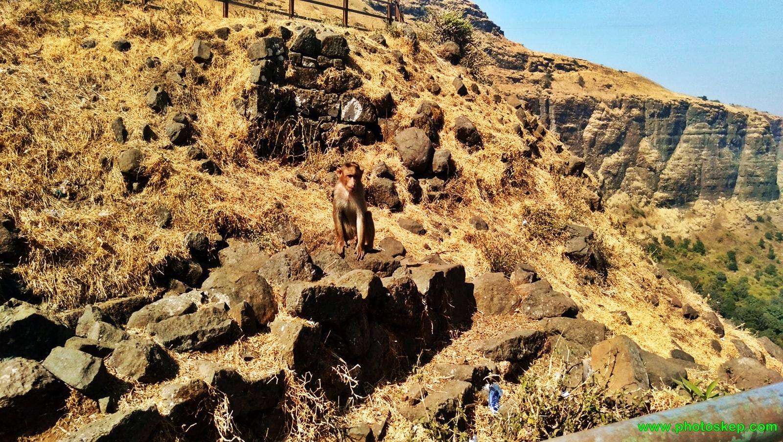 brahmagiri-hills-nasik-mountain-hills-photo-pictures-wallpaper-monkey-photos-free
