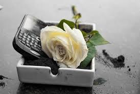 Blackberry đã chết