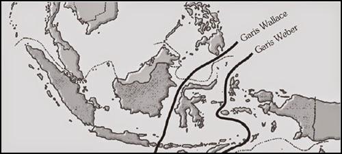 Persebaran Flora di Indonesia, Persebaran Fauna di Indonesia, Pembagian Fauna Menurut Wallace, Pembagian Fauna Menurut Weber, Pembagian Fauna Menurut Lydekker | www.zonasiswa.com