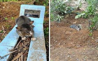 Há um ano, este gato emociona internautas ao não abandonar o túmulo de sua dona na Indonésia. Já faz um ano que a dona deste simpático gato faleceu mas, desde o fatídico dia da morte da idosa senhora, o bichano não arredou o pé do túmulo.