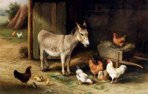 gri eşek ve tavuklar