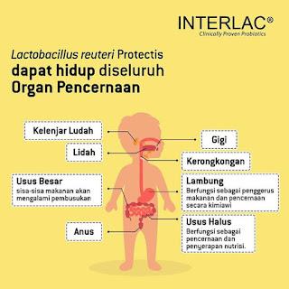 bakteri baik dalam tubuh manusia