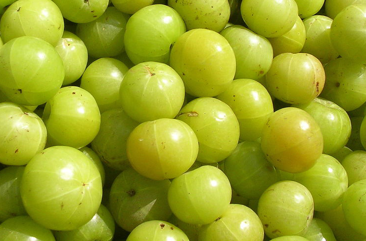 indian fruit plants for your home garden or agriculture