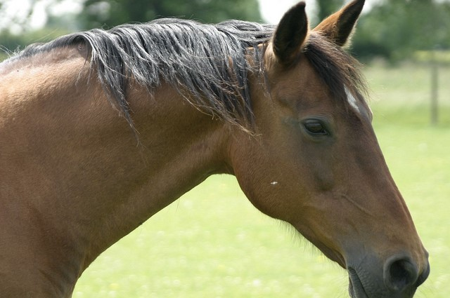 [Guest Blog]  5 Books About Horse Riding For Beginners You Must Read
