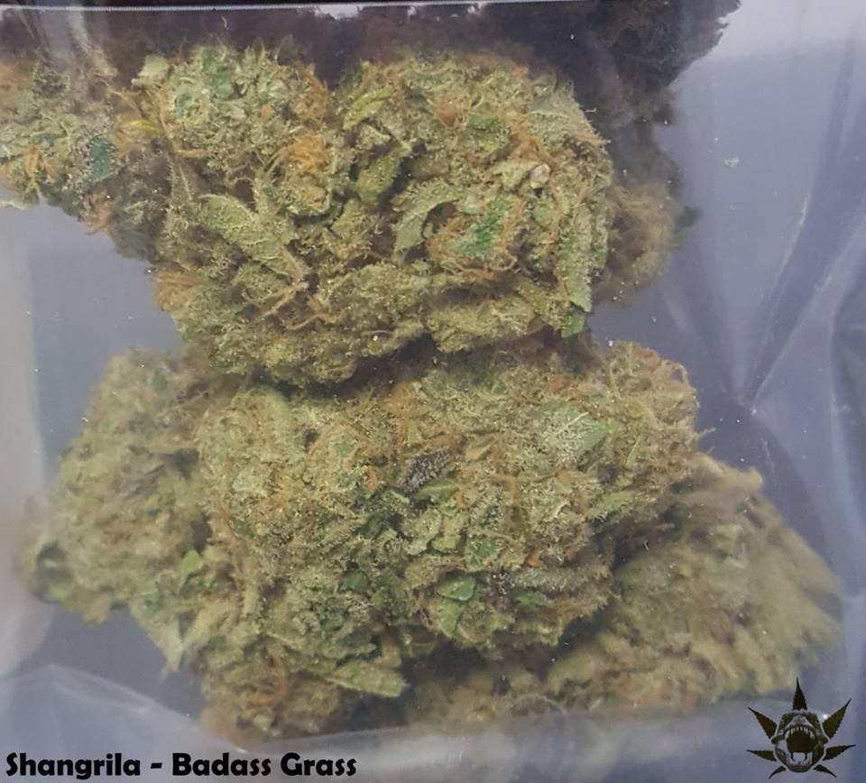 Mt  Vernon Recreational Marijuana: Cannarex