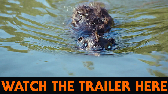 https://www.youtube.com/results?search_query=zombeavers+trailer