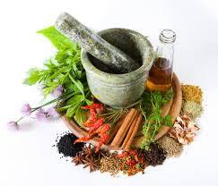 Tumbuhan Tradisional Obat Sipilis