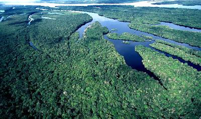 Como proteger a Amazônia?