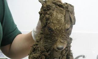Βρήκαν ένα άγνωστο ζώο και μόλις το καθάρισαν δεν πίστευαν στα μάτια τους! (Εικόνες)