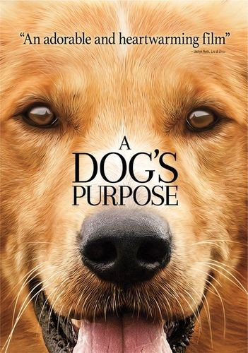 A Dog's Purpose [2017] [DVD9] [NTSC] [Latino]