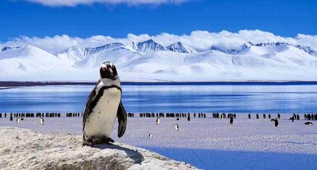 Antarktis Kreuzfahrt mit Pinguin-Beobachtung