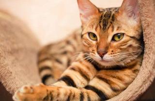 Νέα έρευνα αποδεικνύει ότι οι γάτες είναι ολιστικοί θεραπευτές