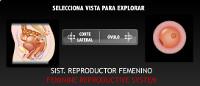 http://www.ampa-diputacio.com/swf/Icarito%20femenino.swf