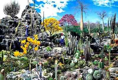 Caatinga | Bioma Exclusivamente Brasileiro