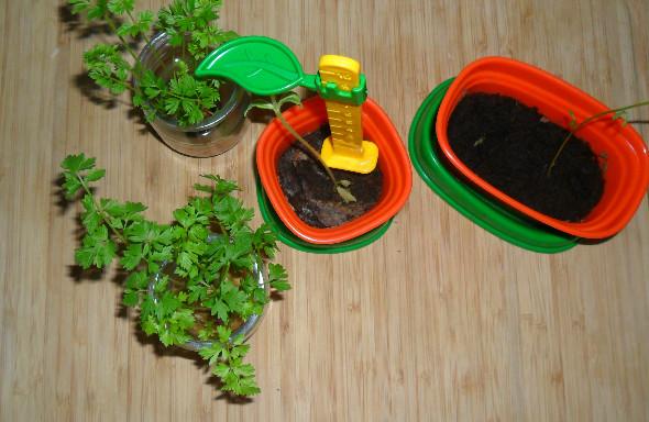 Jakie warzywa można hodować w domu.
