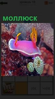 В воде на самом дне плавает моллюск цветной с другими рыбами