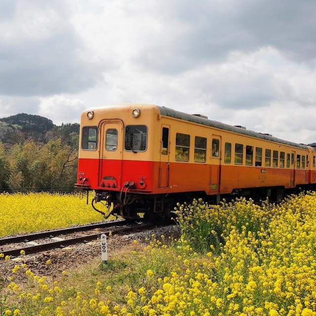 小湊鐵道 石神 菜の花畑