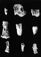 Останки от кремирани човешки кости от финикийски тофет в Тир днешен Ливан