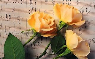 какие розы дарить знакам зодиака