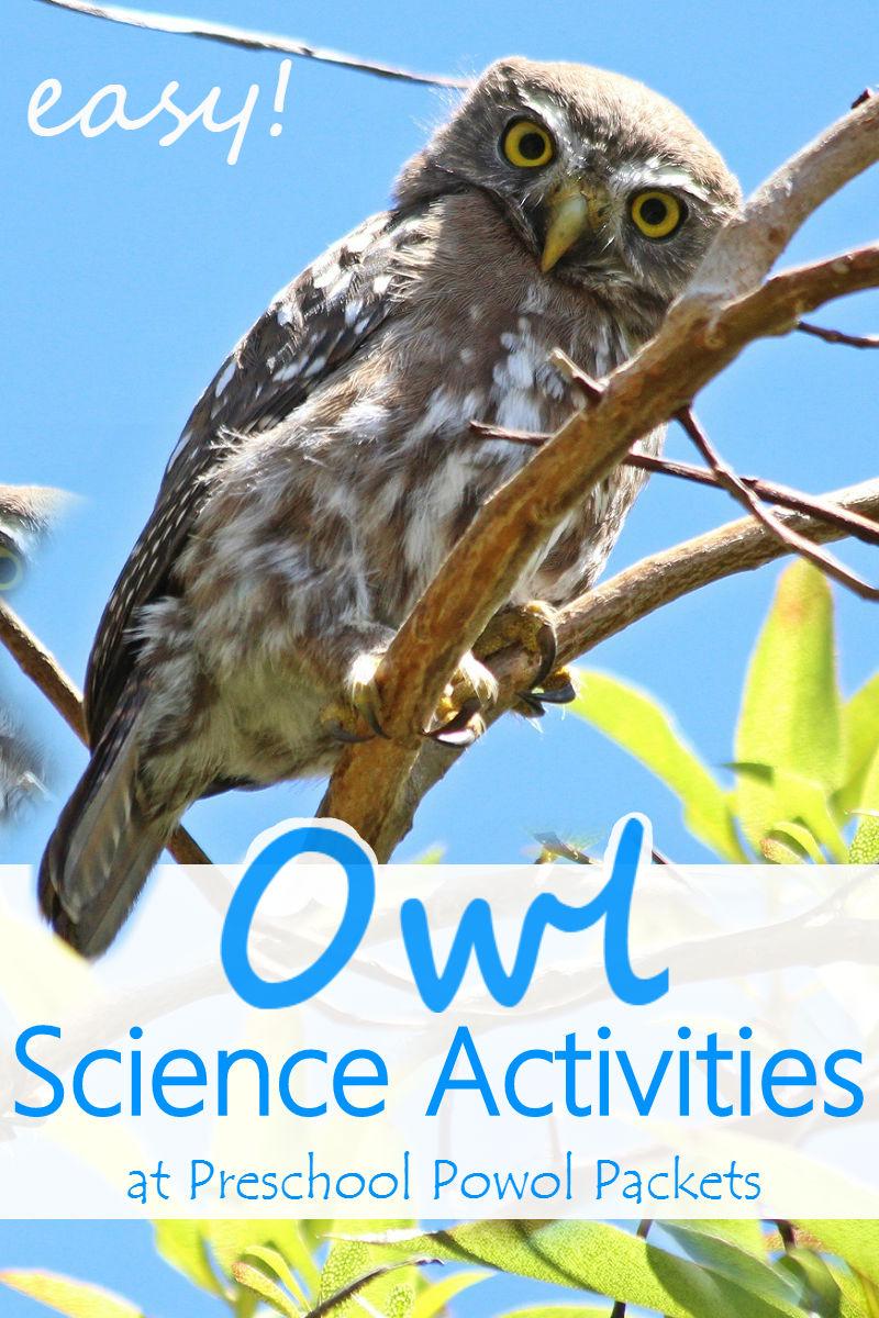 Owl Activities for a Owl Preschool Theme | Preschool Powol ...