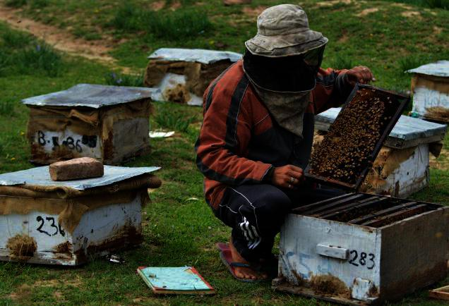 Πως θα υπολογιστεί η προκαταβολή φόρου για τους επαγγελματίες αγρότες - μελισσοκόμους