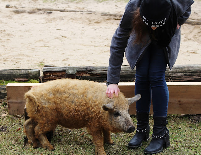 Wildpark Schorfheide Schweine