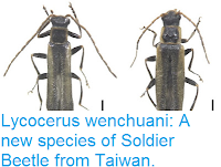 http://sciencythoughts.blogspot.co.uk/2016/07/lycocerus-wenchuani-new-species-of.html