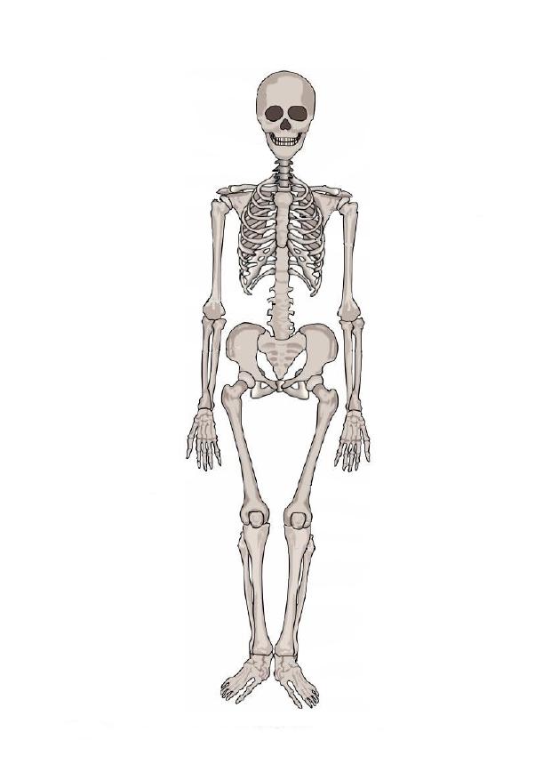 Crapouillotage le squelette - Dessiner un squelette ...