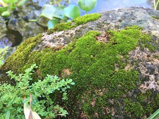 briófitas reprodução características estrutura biologia reino vegetal resumo