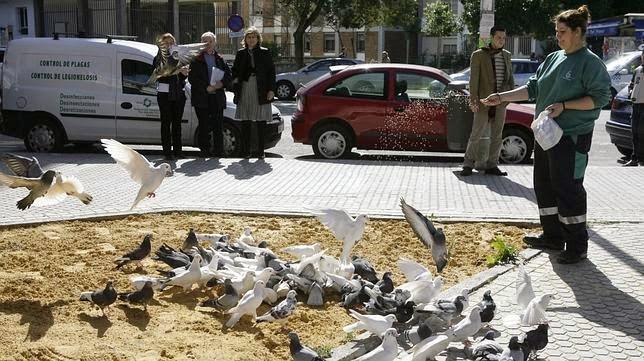 Acabemos con el maltrato a las palomas: Captura de palomas (art