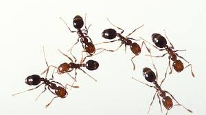 ants on tree in dream
