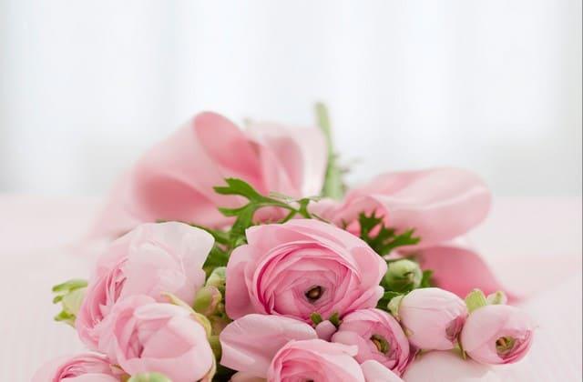 wallpaper mawar pink yang memukau