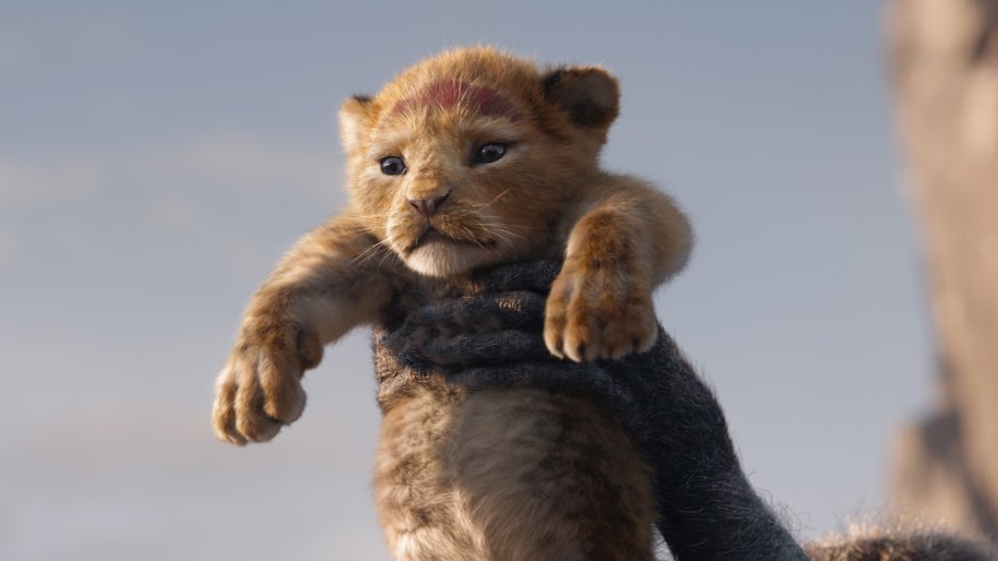 The Lion King 2019 Simba 4k Wallpaper 5