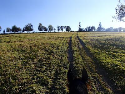grzyby w sierpniu, grzyby 2016, grzyby na Orawie, grzybobranie 2016, gatunki chronione, Hydnellum floriforme, konie, jazda konna, jazda konna w terenie, jazda konna na Orawie