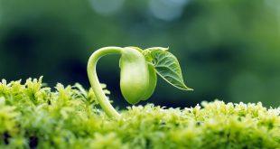 Memahami 3 Sifat Sang Maha Arsitek Pada Akhiran Surat Al-Hasyr (Tafsir Al-Mishbah)