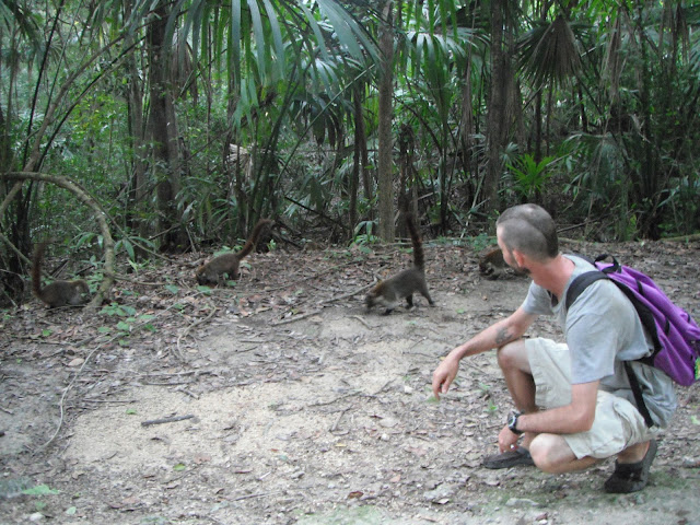 Tikal National Park Guatemala coatis pizotes